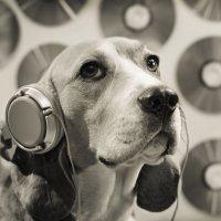 """Кружатся диски, или """"Эй, ди-джей! Музончик прибавь!"""" :: Тата Казакова"""