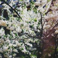 Любимый май.. :: Алсу Илькаева