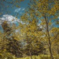 Полдень в лесу :: Наталья Терентьева