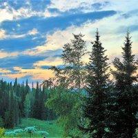 Вечерком в лесу :: Сергей Чиняев