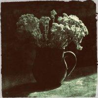 Цветы лета :: Ольга Мальцева