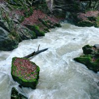 белая река :: Elena Wymann