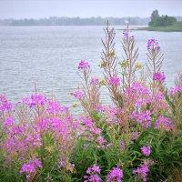 Цветы на берегу :: Валерий Талашов