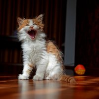 Страшнее кошки зверя нет... :: Александр Бойко