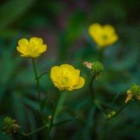 Цветы :: Софья Оганова