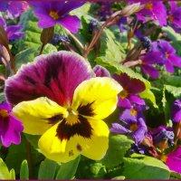 Радость весны :: lady v.ekaterina