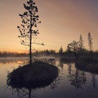 Полярная сосна в ночной дымке :: Татьяна Мурина