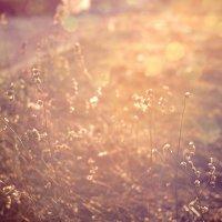 Весеннее напоминание об осени :: Юка Добрынина