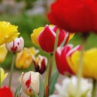Спасибо месяц Май! :: Владимир Гилясев