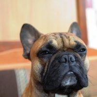 Собака-подозревака получилась. :: Береславская Елена