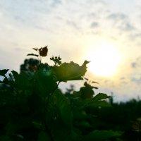 Закат весеннего солнца :: Ирина Божко