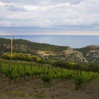 Виноградник в голубом заливе :: Никита Волосянов