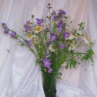 Полевые цветы... :: Наталья