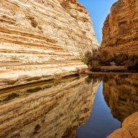 Оазис в пустыне :: Натали Заика
