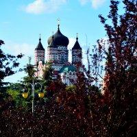 Свято-Пантелеимоновский женский монастырь (пустынь «Феофания») :: Ирина Божко
