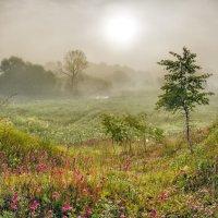 Утро туманное :: Николай Андреев