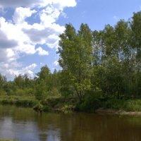 река Птичь, Беларусь... :: Виктор _