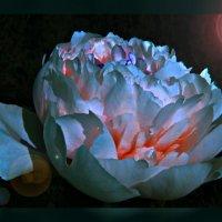 Ночной бриллиант по фото Н.Кузнецовой :: Владимир Хатмулин