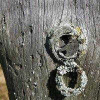 Старинный медальон :: Валерий Талашов