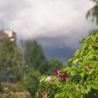 Скоро дождик :: Виталий