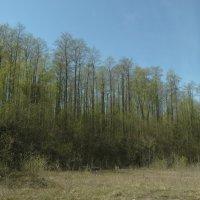 странный лес... :: Михаил Жуковский