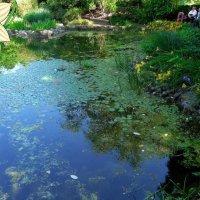 Летний отдых в ботаническом саду :: Nina Yudicheva