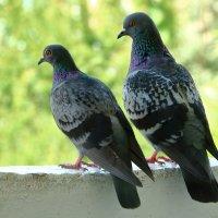 Хороша голубушка! :: Светлана