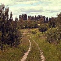 Лесные дороги :: Наталия Рой
