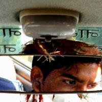 Индия. Внимательный водитель :: Дарья Фисун