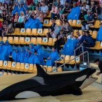 Лора Парк, Тенерифа, атракцион китов :: Witalij Loewin