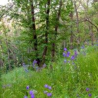 На склоне в лесу :: Юрий Стародубцев