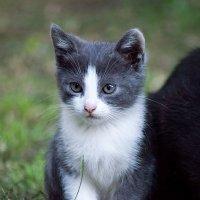 Милый кубанский котёнок! :: Елена Нор