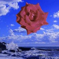 Meditative Rose (Подражание Дали) :: Татьяна Дружинина