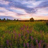 Вечерние краски деревни... :: Александр Никитинский