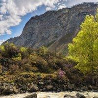 Весна на Куркуре :: Владимир Колесников