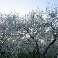 Цветущий сад :: Аlexandr Guru-Zhurzh