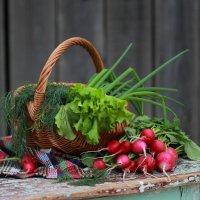 Будем  есть только вкусное и полезное! :: Наталья Казанцева
