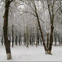 Заснеженный парк :: lady v.ekaterina