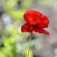 Солнечный цветок :: Петр Заровнев