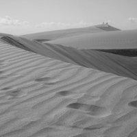 в дюнах :: liudmila drake