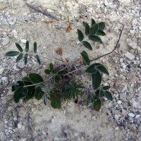 растительность меловых гор :: tgtyjdrf