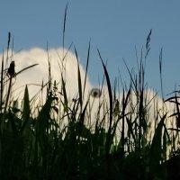 ...трава... :: Владимир Гилясев