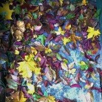 Осенние краски :: Юлия Ненахова