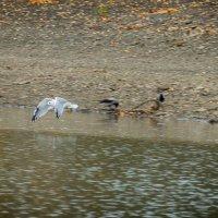 Нет места белым птицам на этих берегах… :: Алексей (АСкет) Степанов