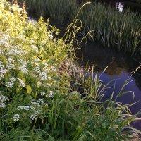 Мне нравятся  трава в закатных бликах :: Надежда