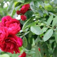 Цветок, прекрасный точно жизнь. :: Валентина ツ ღ✿ღ