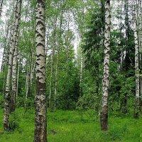 лес возле станции в тверской области :: megaden774