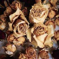 сухие розы :: Ольга Токмакова