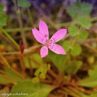лесной цветок :: Олеся Ушакова