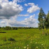 Летний пейзаж :: Милешкин Владимир Алексеевич
